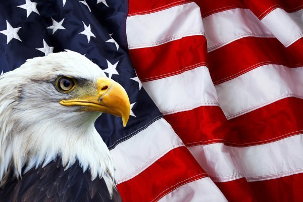 American Flag with Bald Eagle