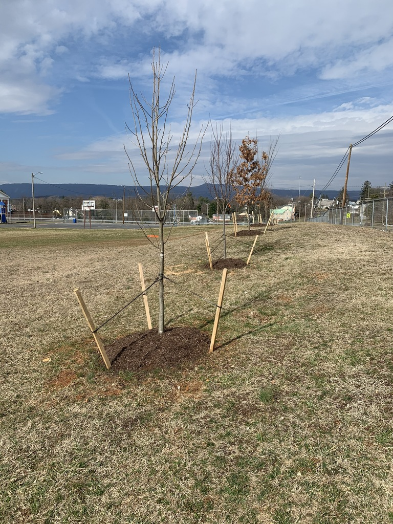new trees planted
